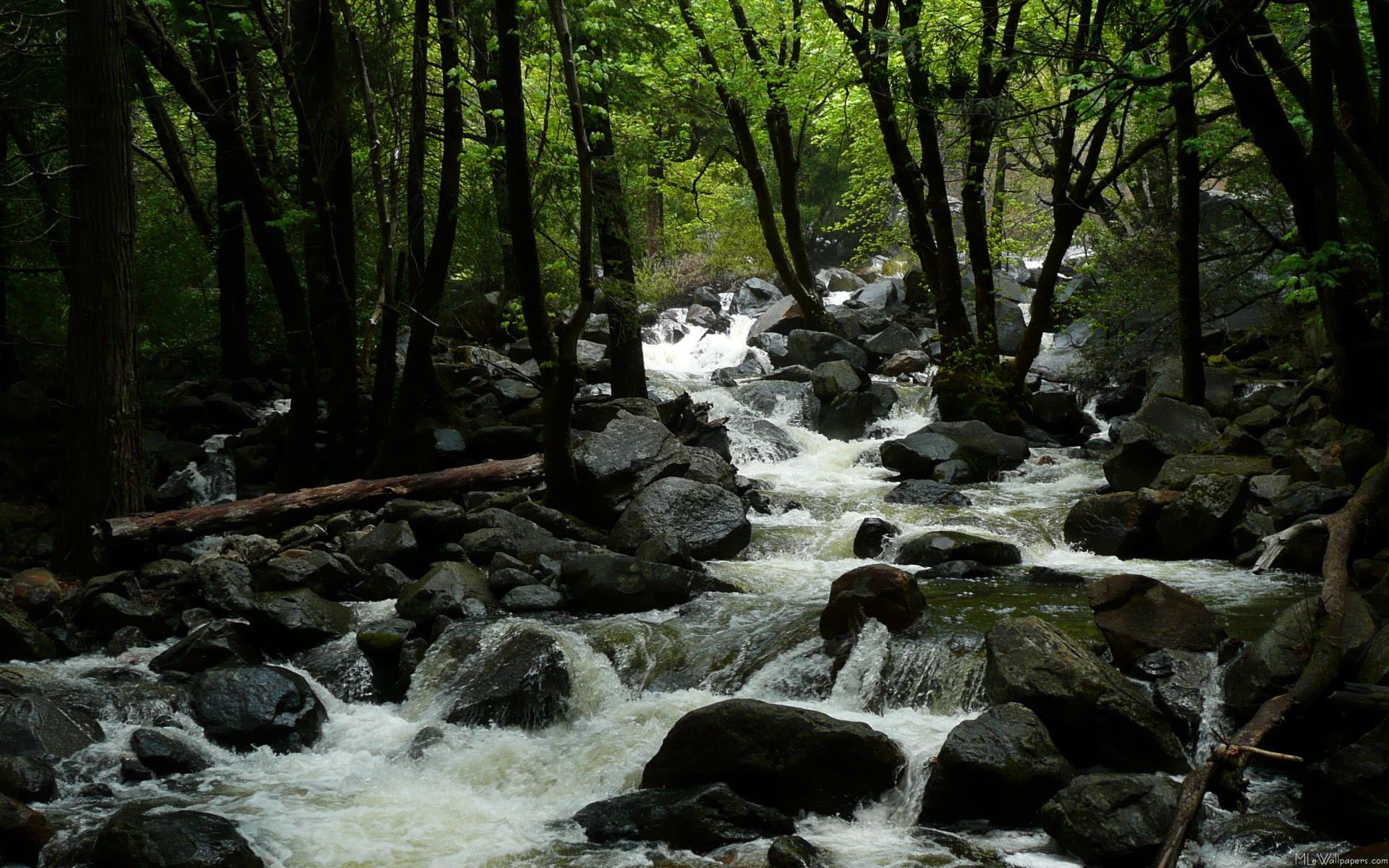 Creek Wallpaper 31424 1920x1200 px