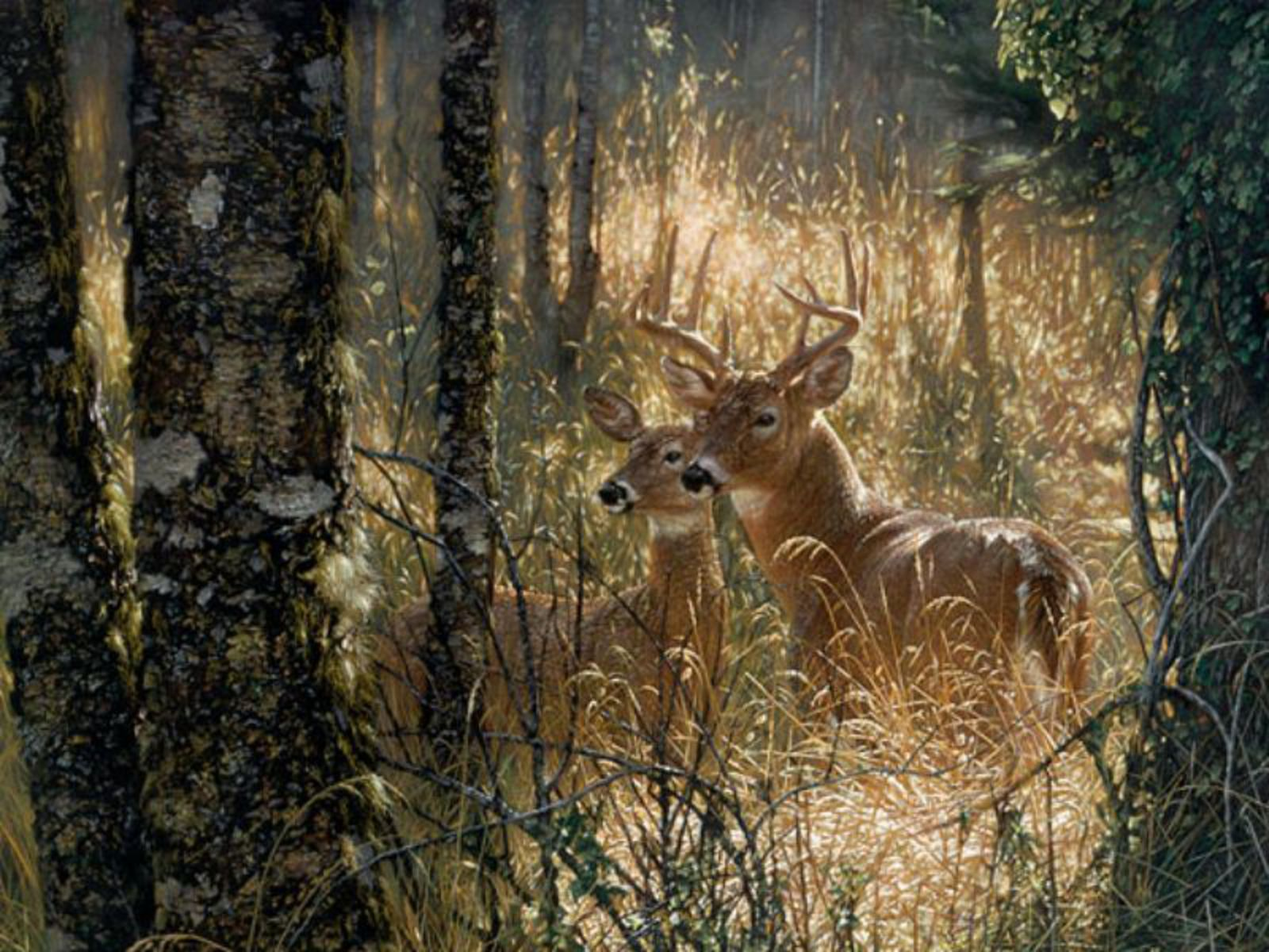 deer couple hd wallpapers fullscreen