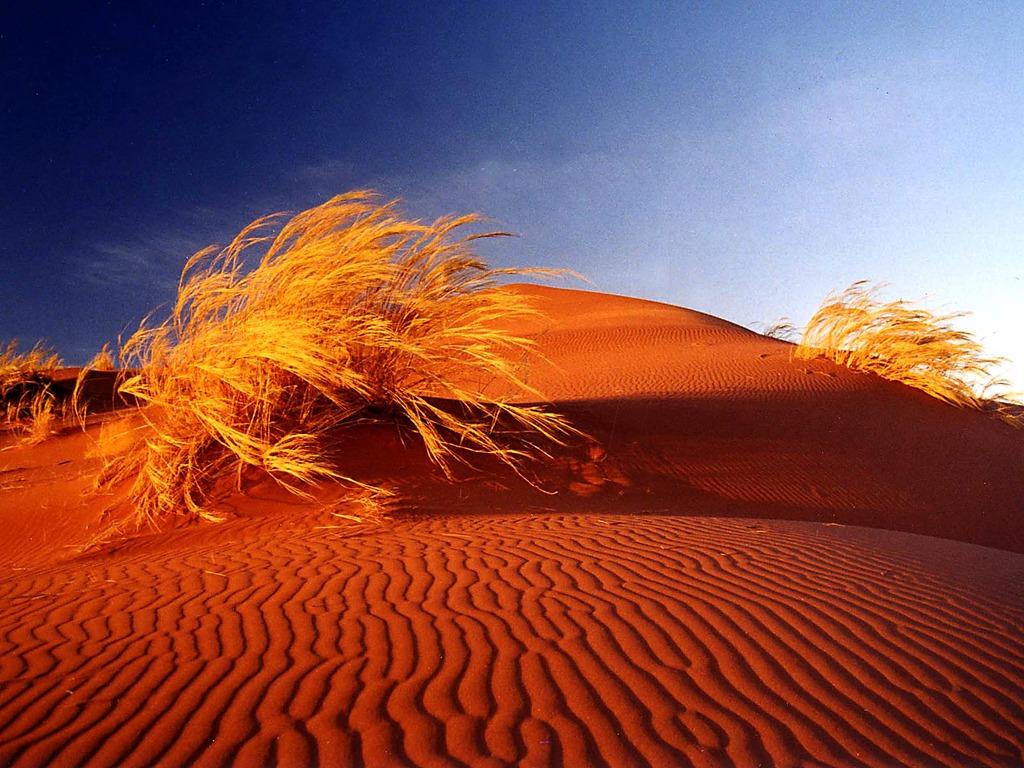 Desert Scenes Photo