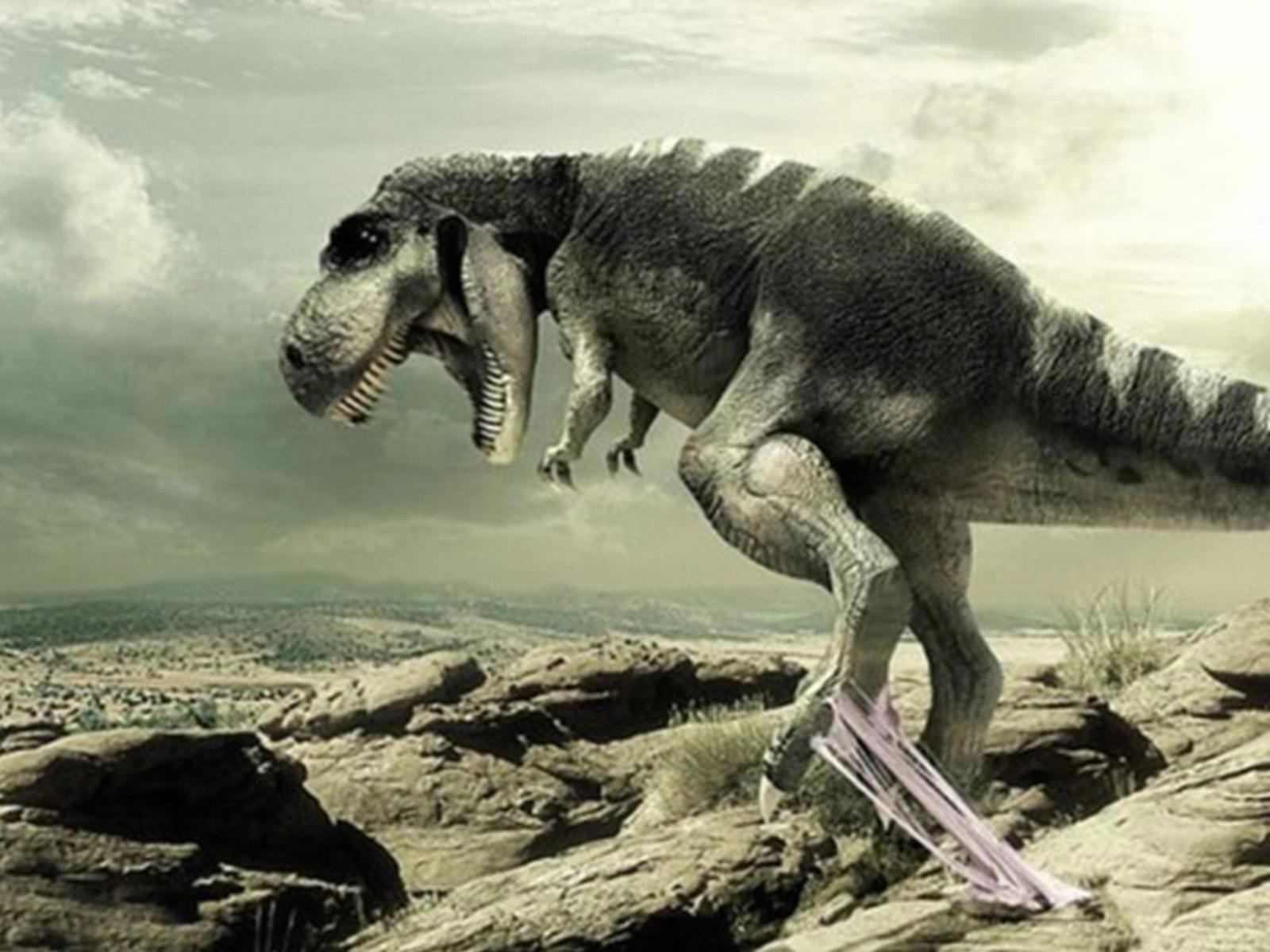Dinosaur High Res Wallpaper Wollpopor