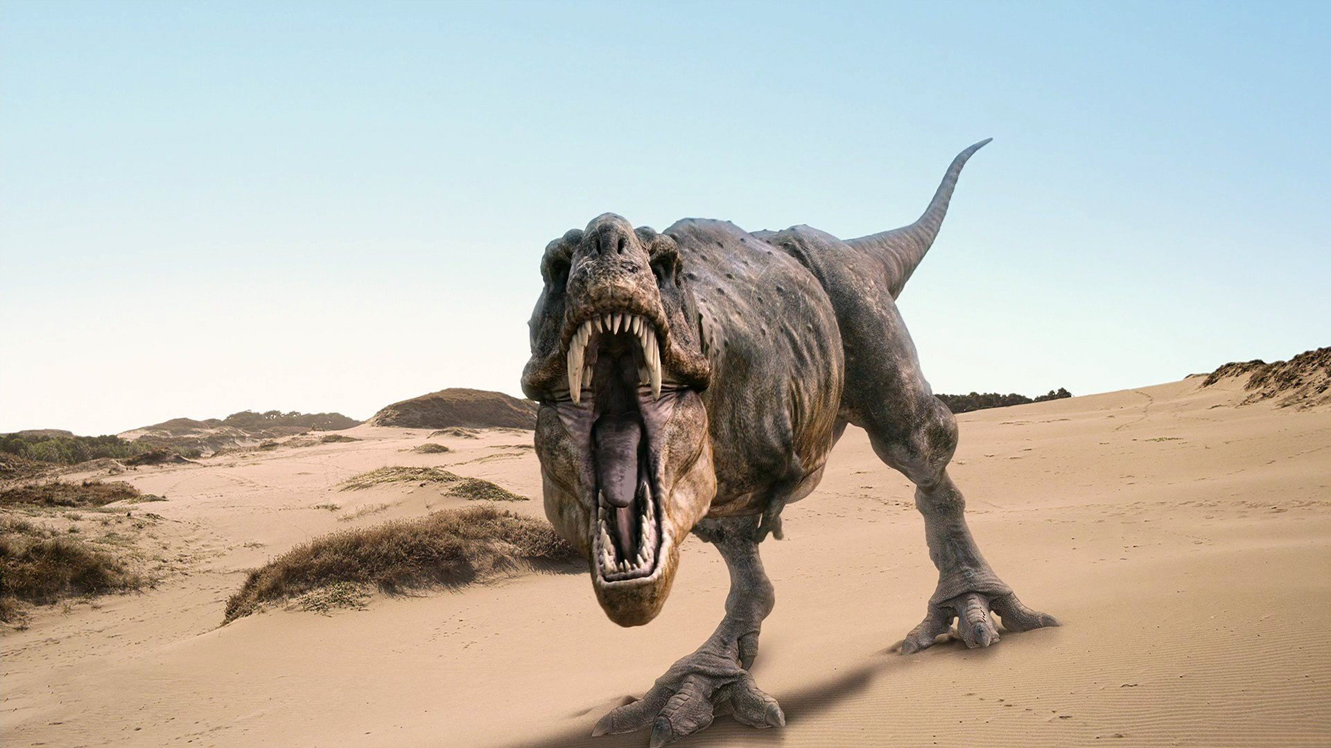 HD Wallpaper | Background ID:288601. 1920x1080 Animal Dinosaur