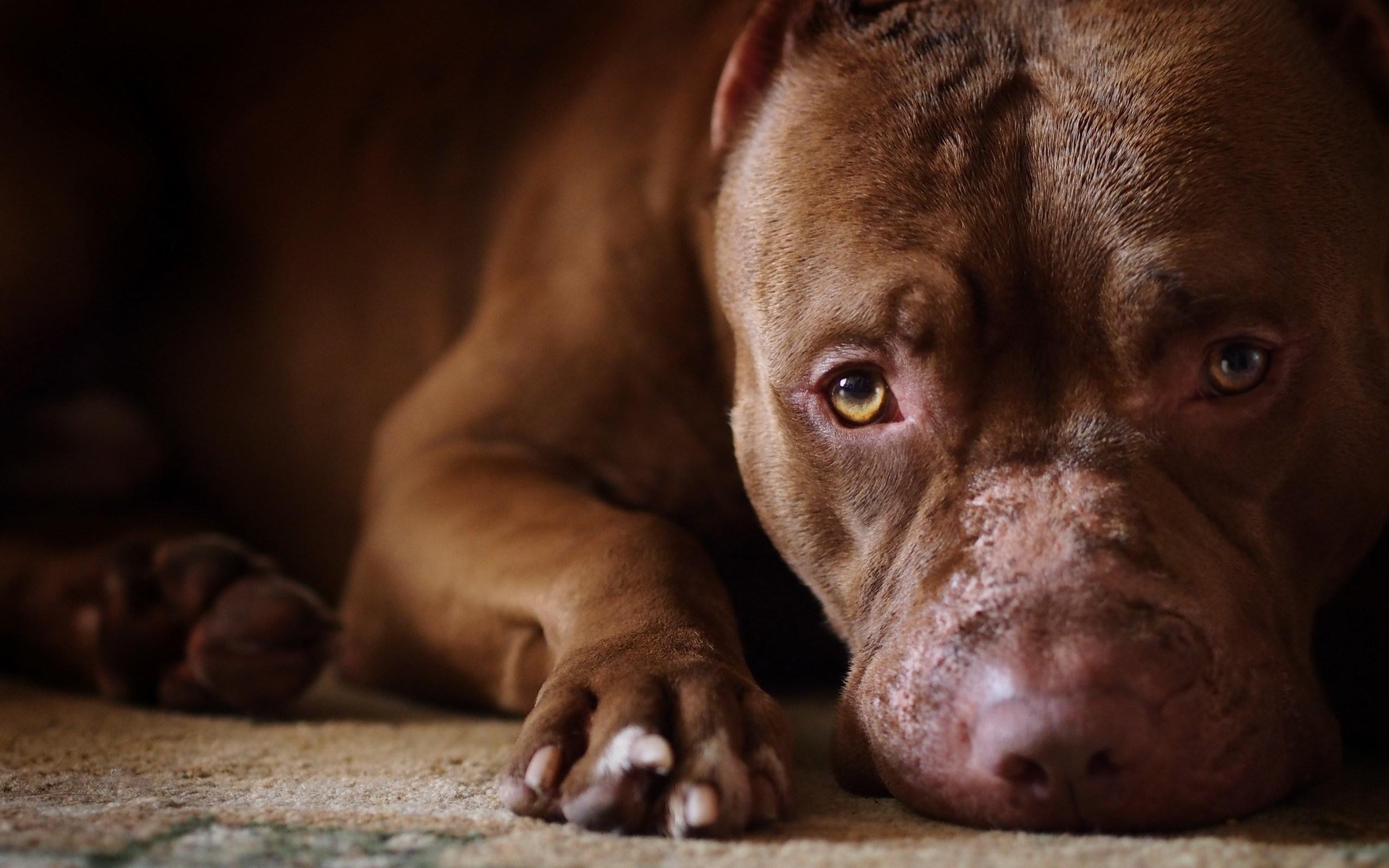 Close-Up Dog Look HD Wallpaper