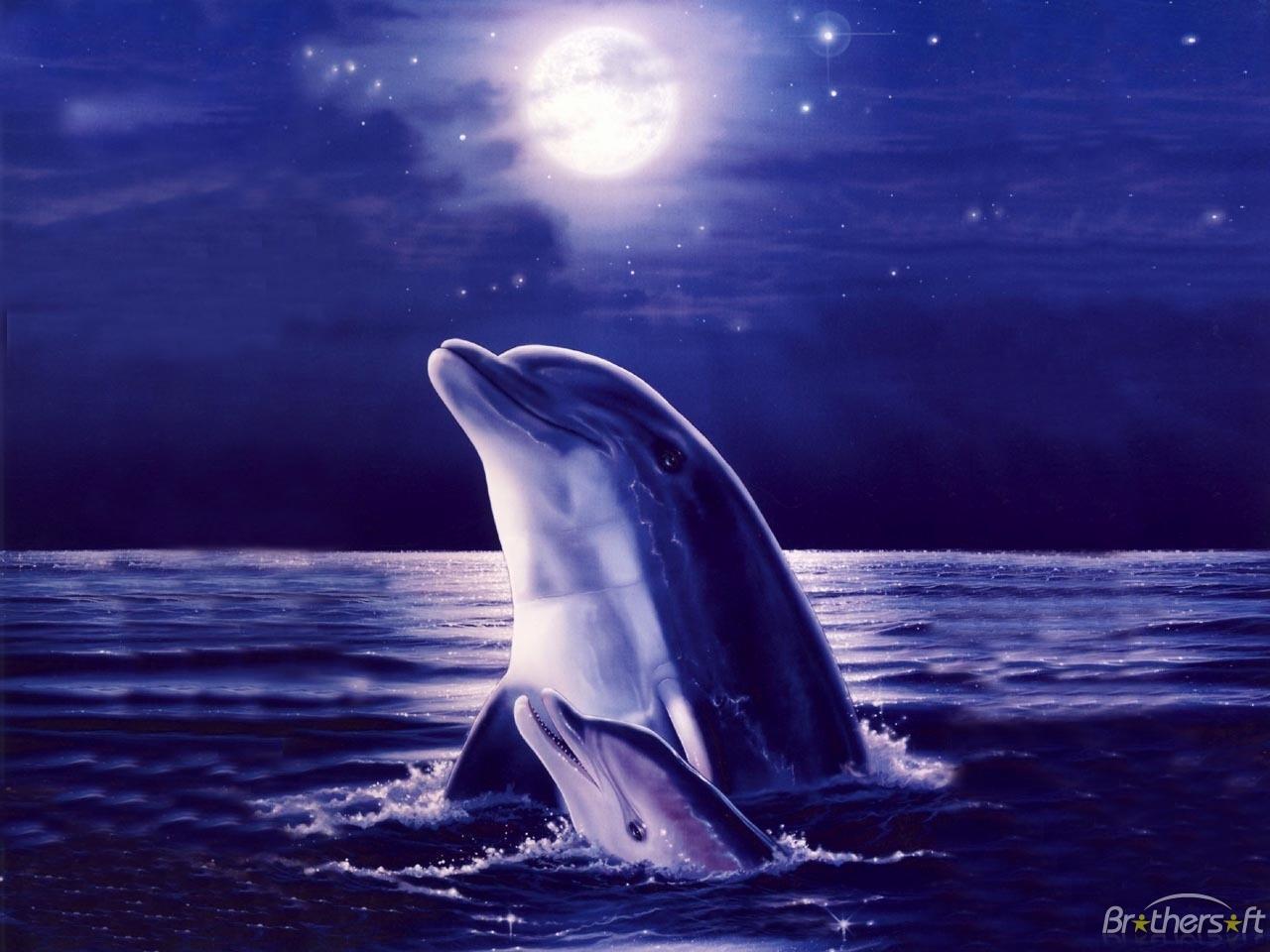 Free dolphin for desktop wallpaper 1280x960 13096 free dolphin wallpaper for desktop voltagebd Gallery