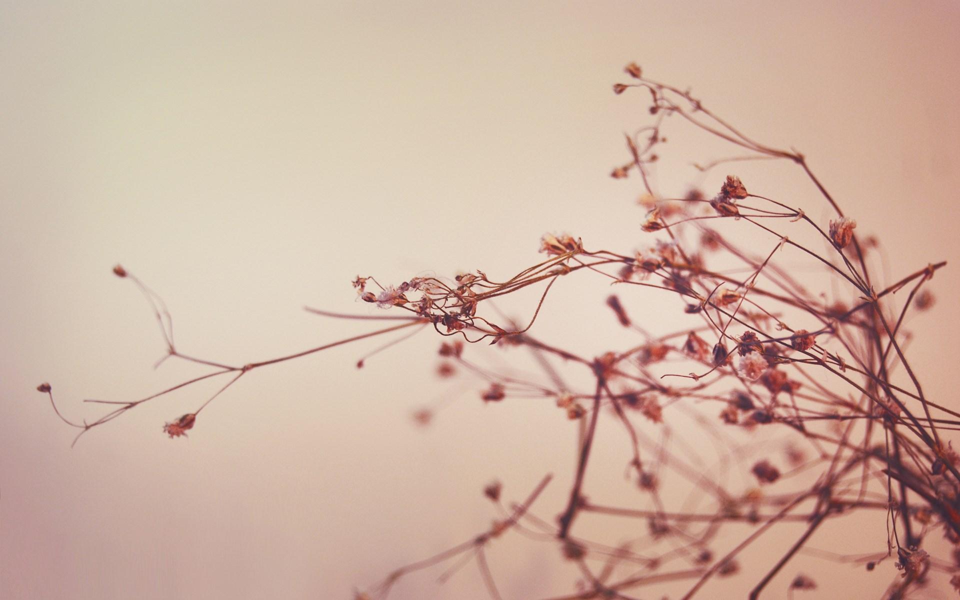 Dry Plants Wallpaper