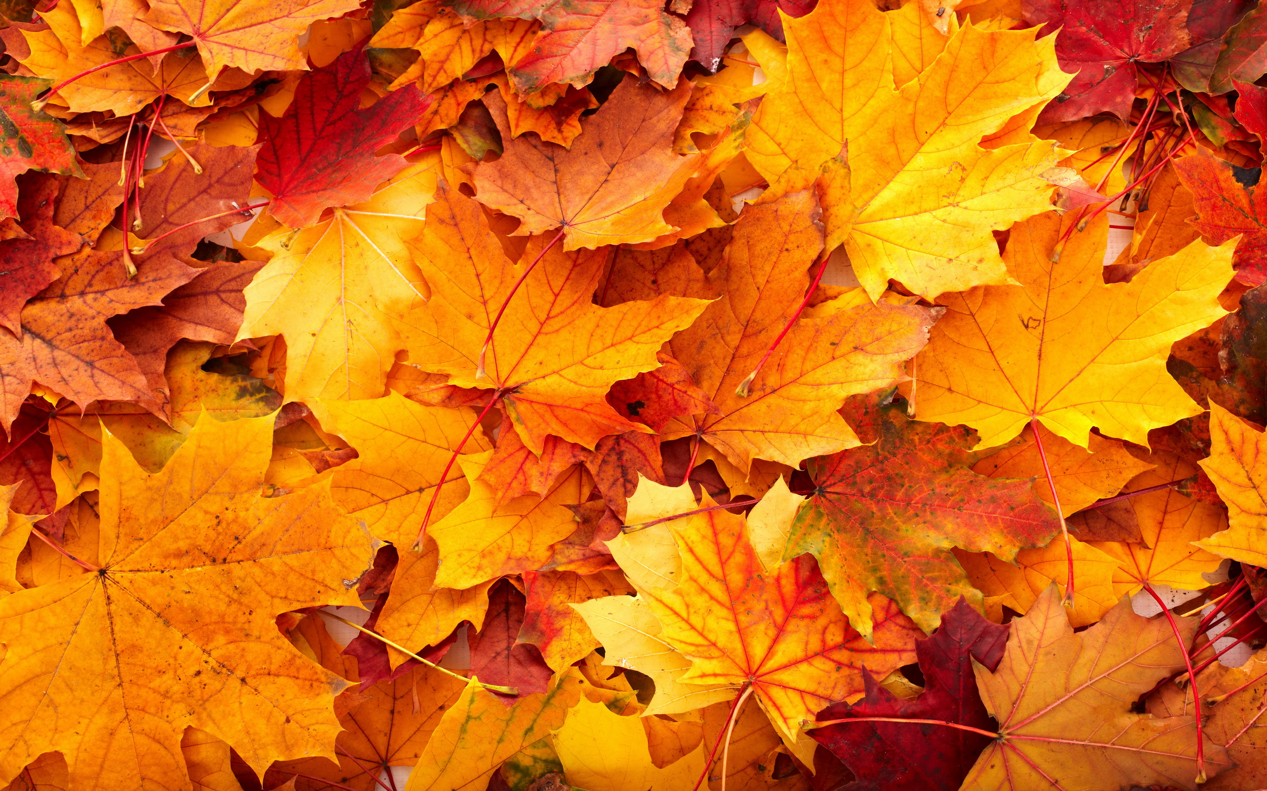 Free Fall Leaves Background