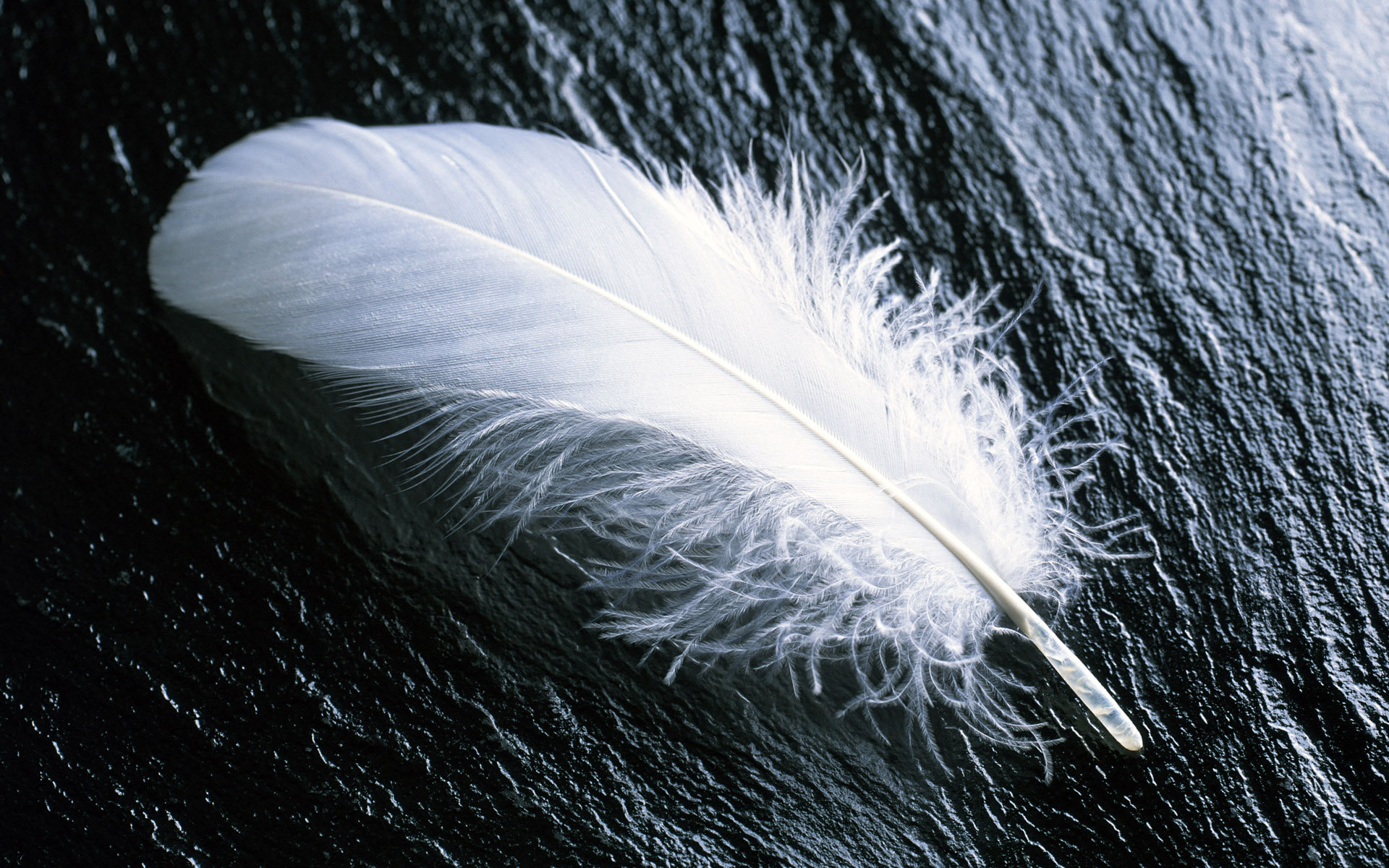 Free Feather Wallpaper