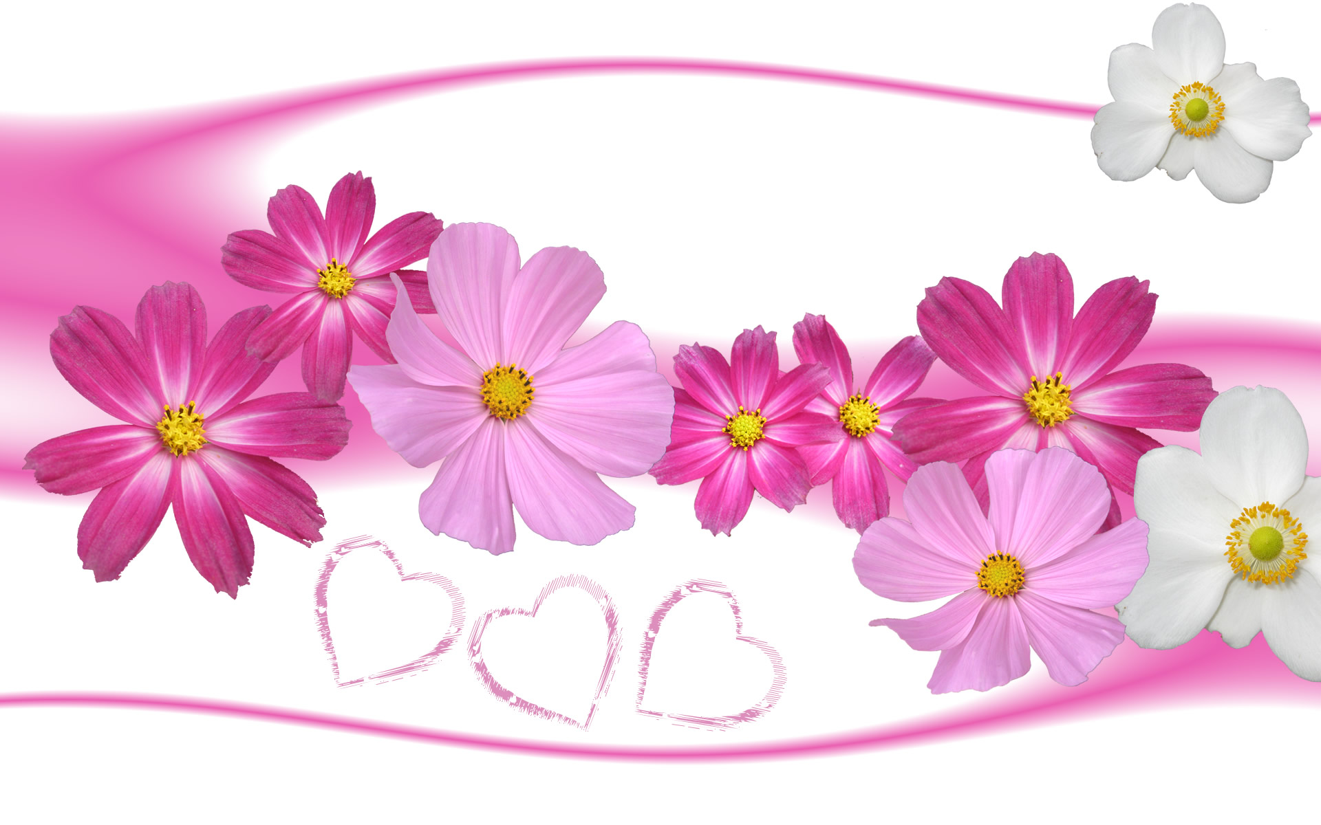 Free Flower Wallpaper