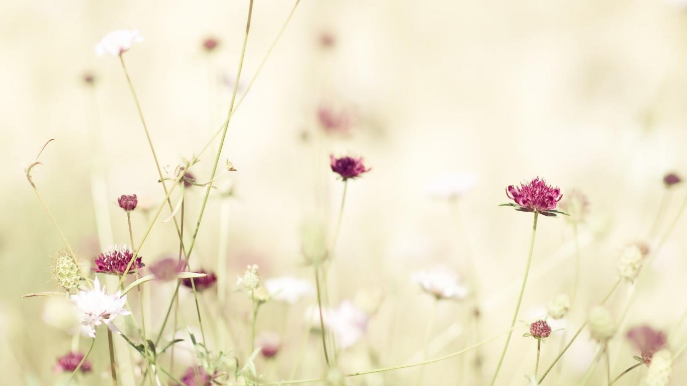 Free Flower Tumblr Wallpaper 1366x768 35113