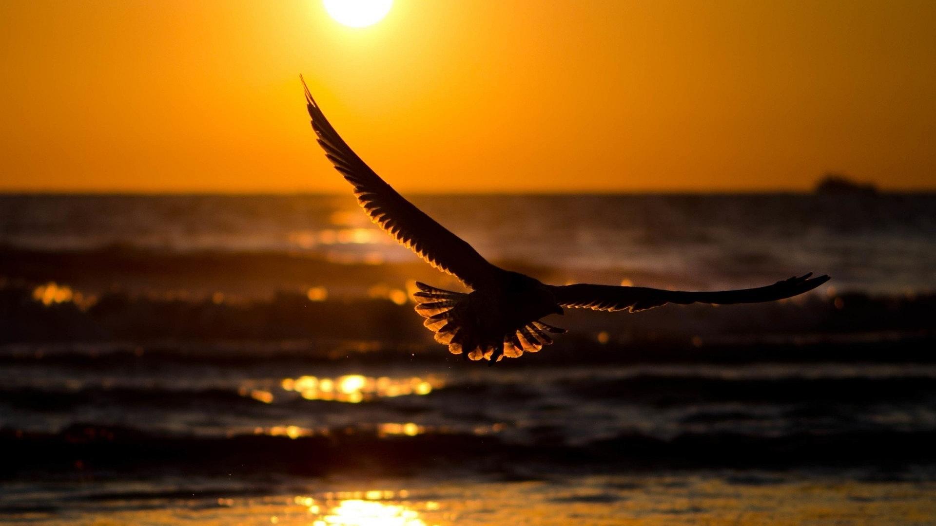 ... Flying Birds HD Wallpapers bird 7 bird 8 bird 9 ...