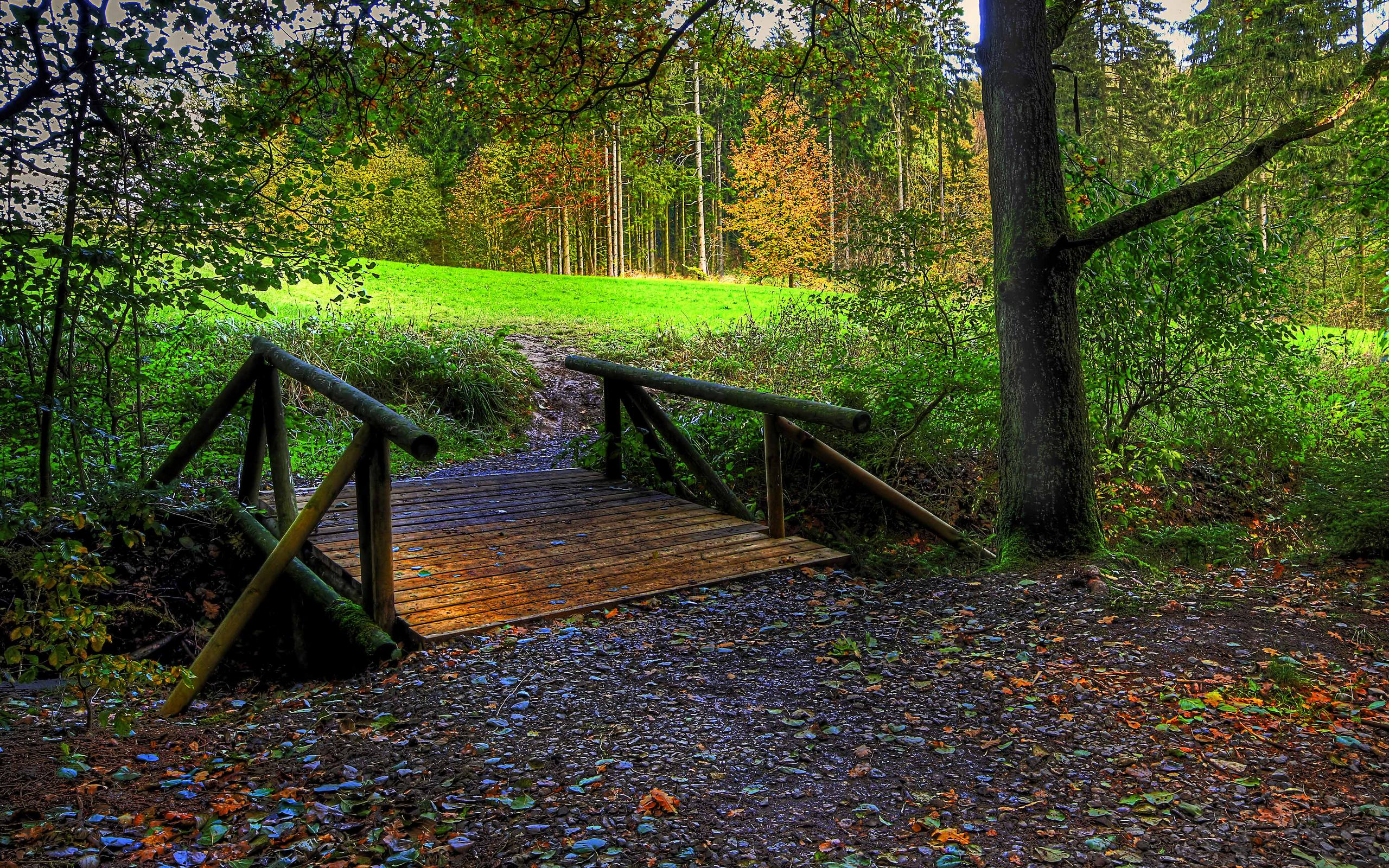 HD Wallpapers Autumn Free Wallpaper - Bridge To The Forest