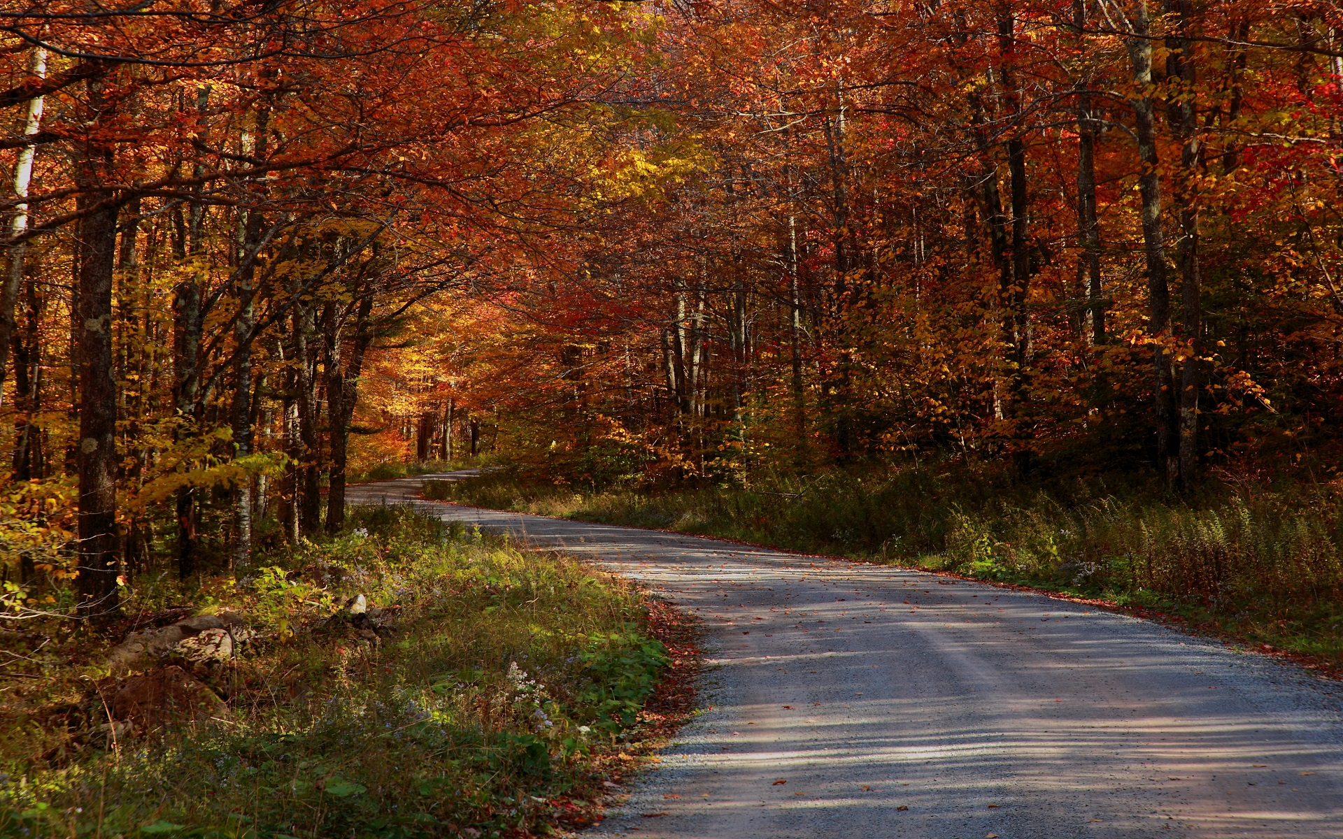 Free Forest Road Wallpaper