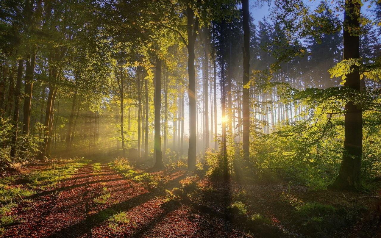 Autumn Forest Sun Rays Windows 8 Wallpaper (click to view)
