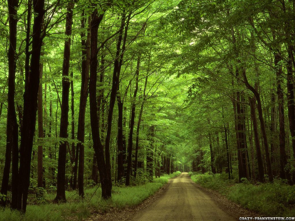 Wallpaper: Allegheny national forest Pennsylvania