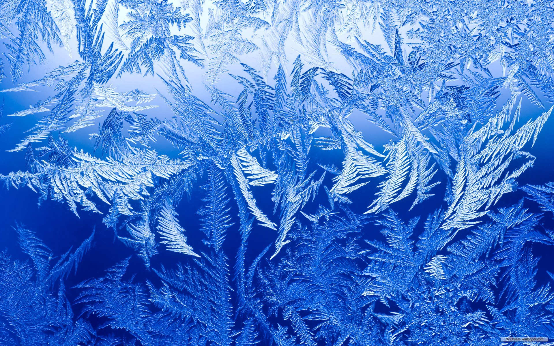 Free Photography wallpaper - Snow and frost wallpaper - 1920x1200 wallpaper - Index 6
