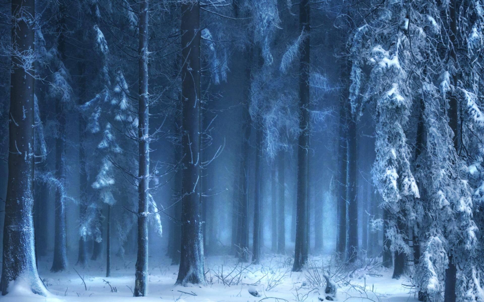 Free Frozen Forest Wallpaper