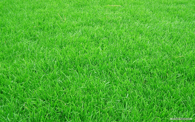 Free Grass Background
