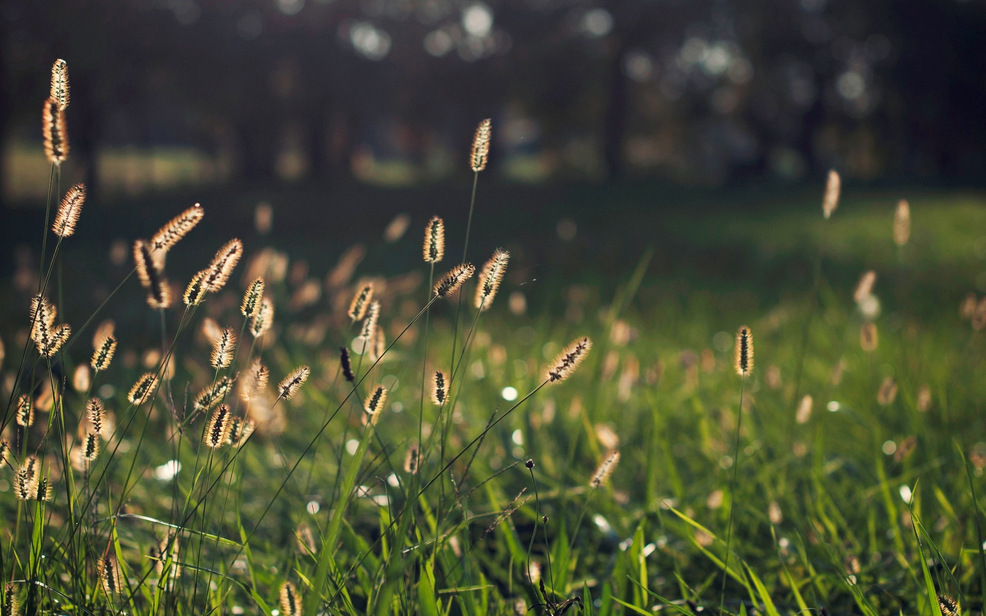 Free Grass Bokeh Wallpaper
