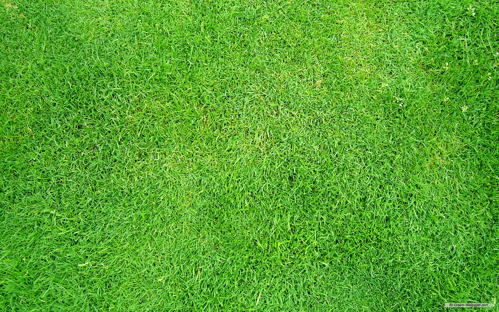 Free Grass Wallpaper
