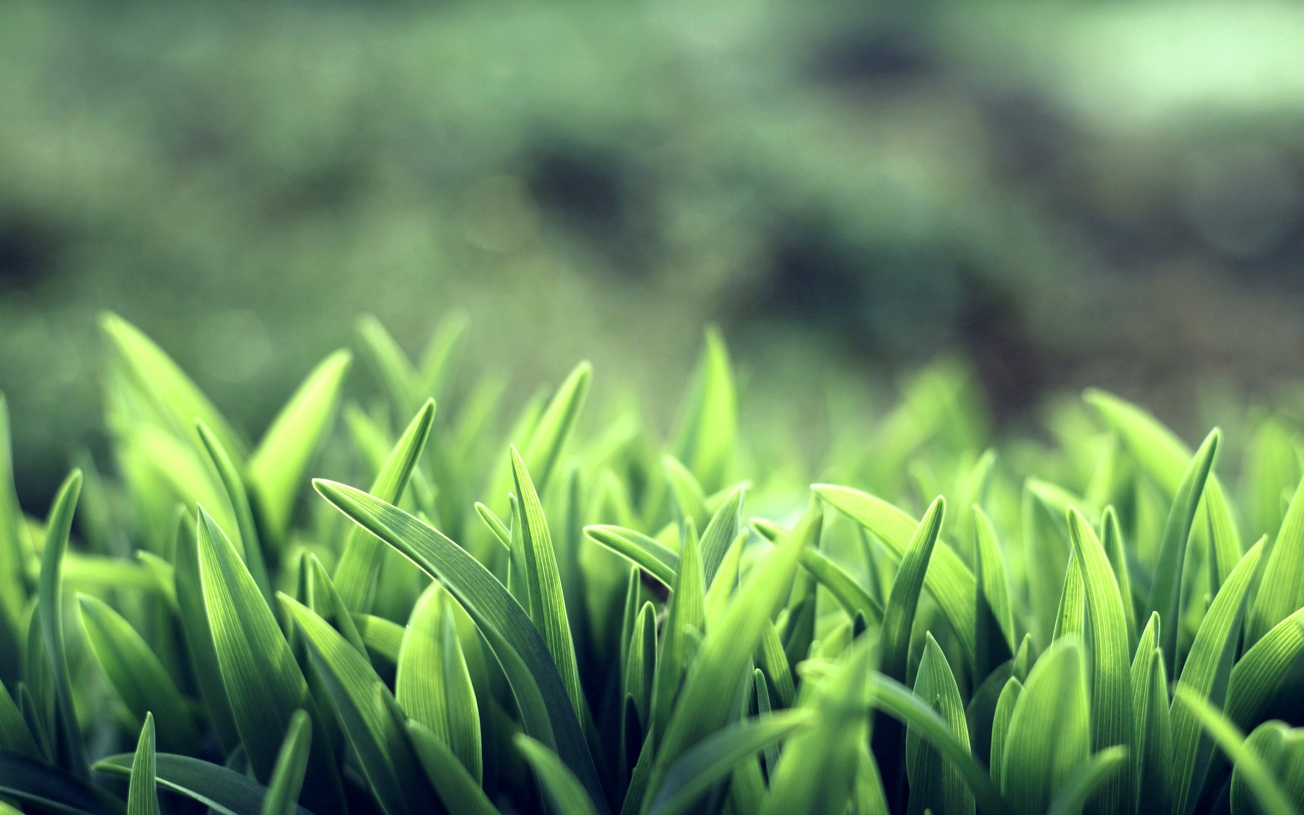 Free Green Macro Wallpaper