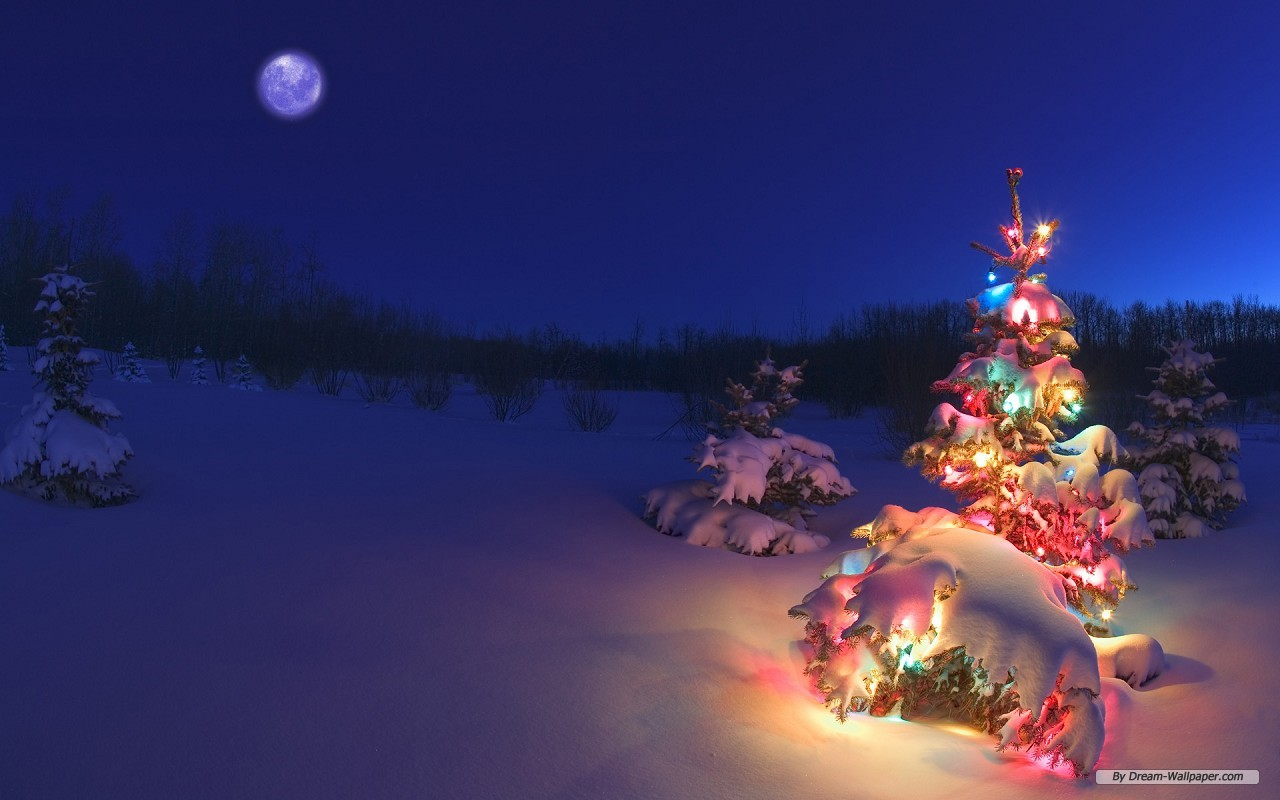 Free Holiday Wallpaper 31573 1680x1050 px