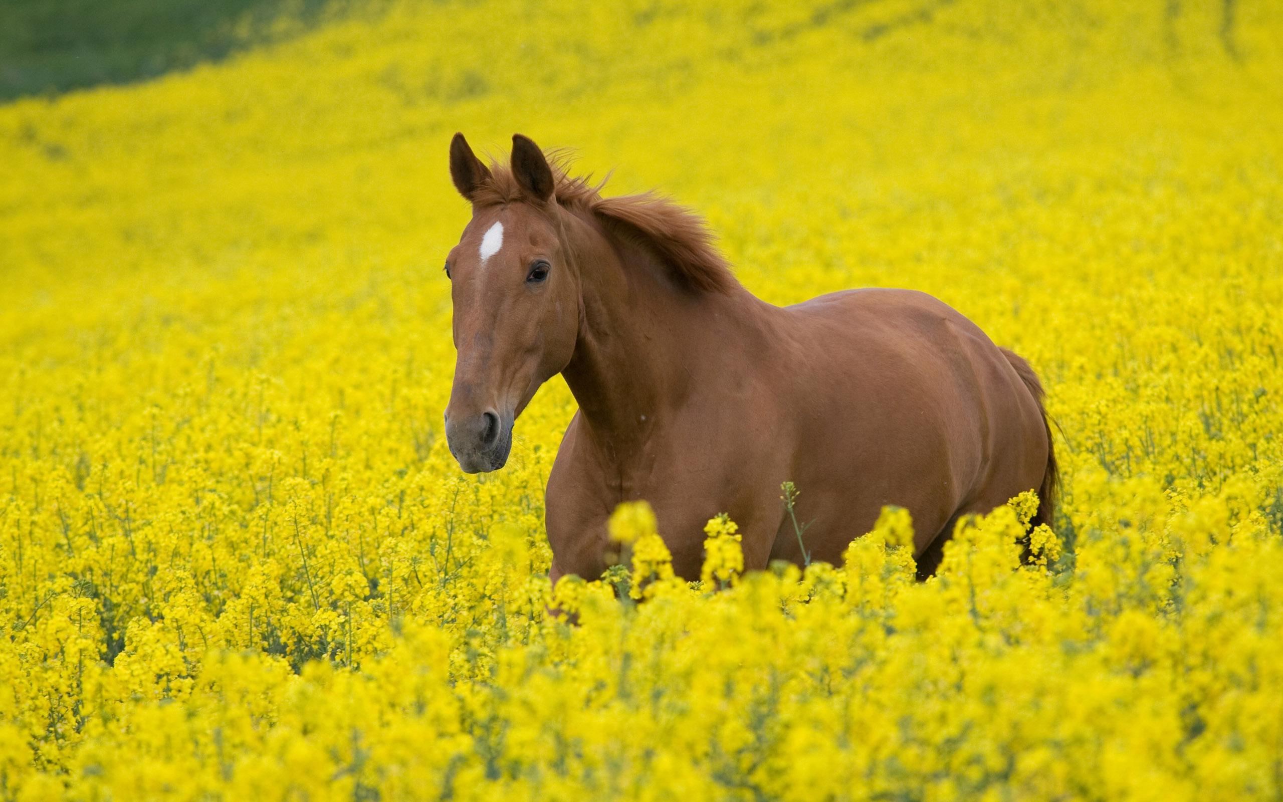 Free Horse Wallpaper 2560x1600 58455
