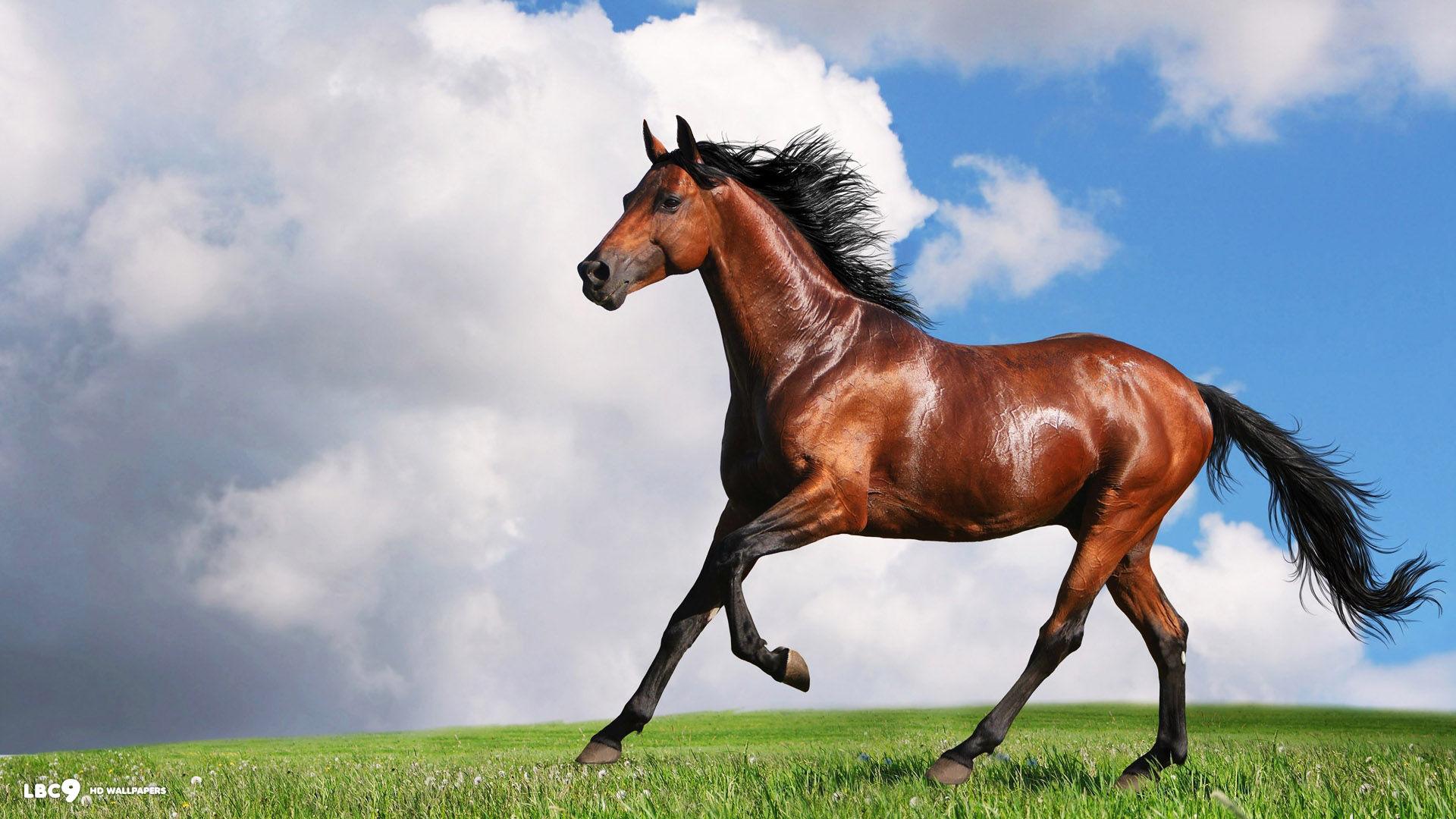 Free Horse Wallpaper