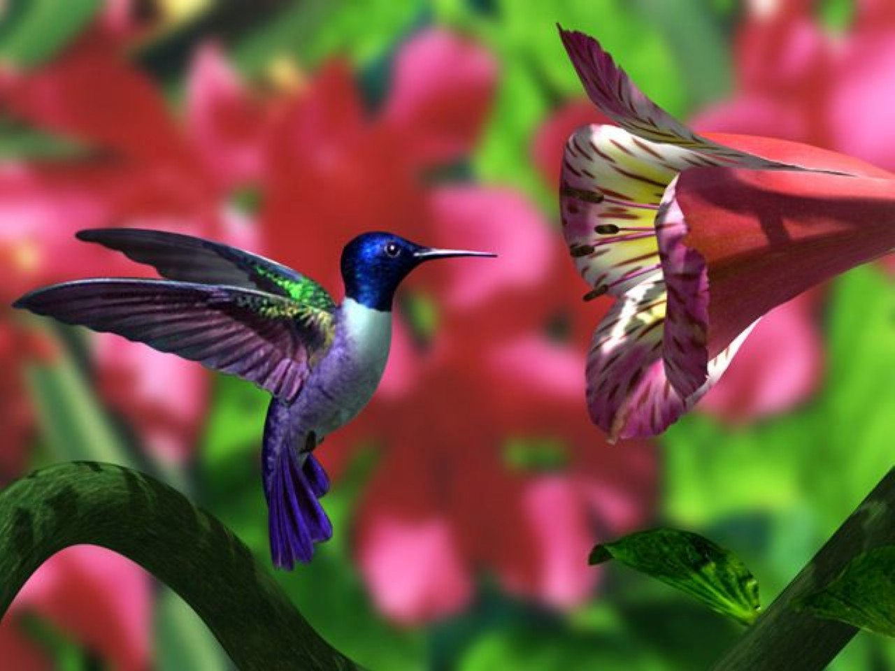 Free Hummingbird Wallpaper