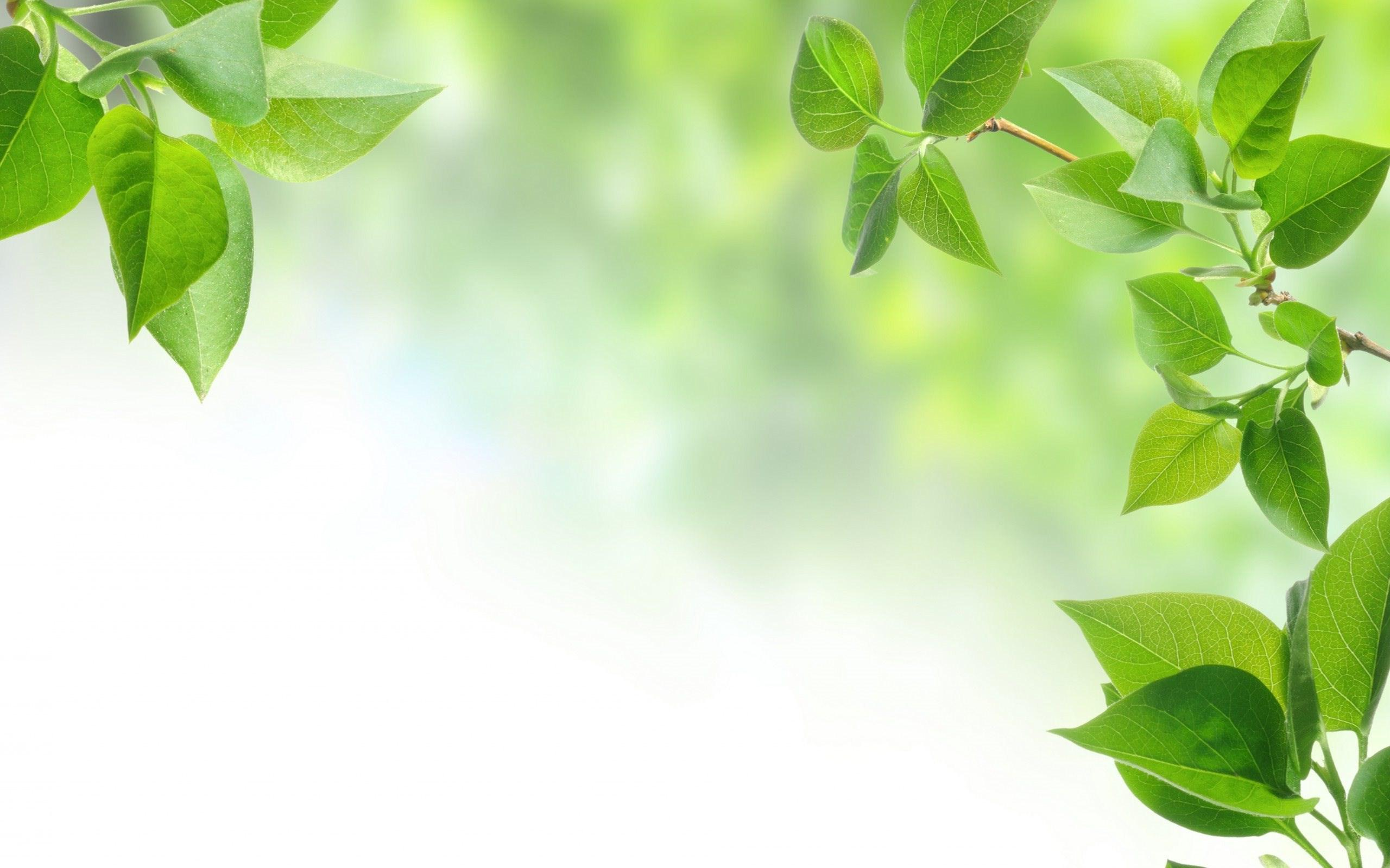 Download: Leaves Background Desktop
