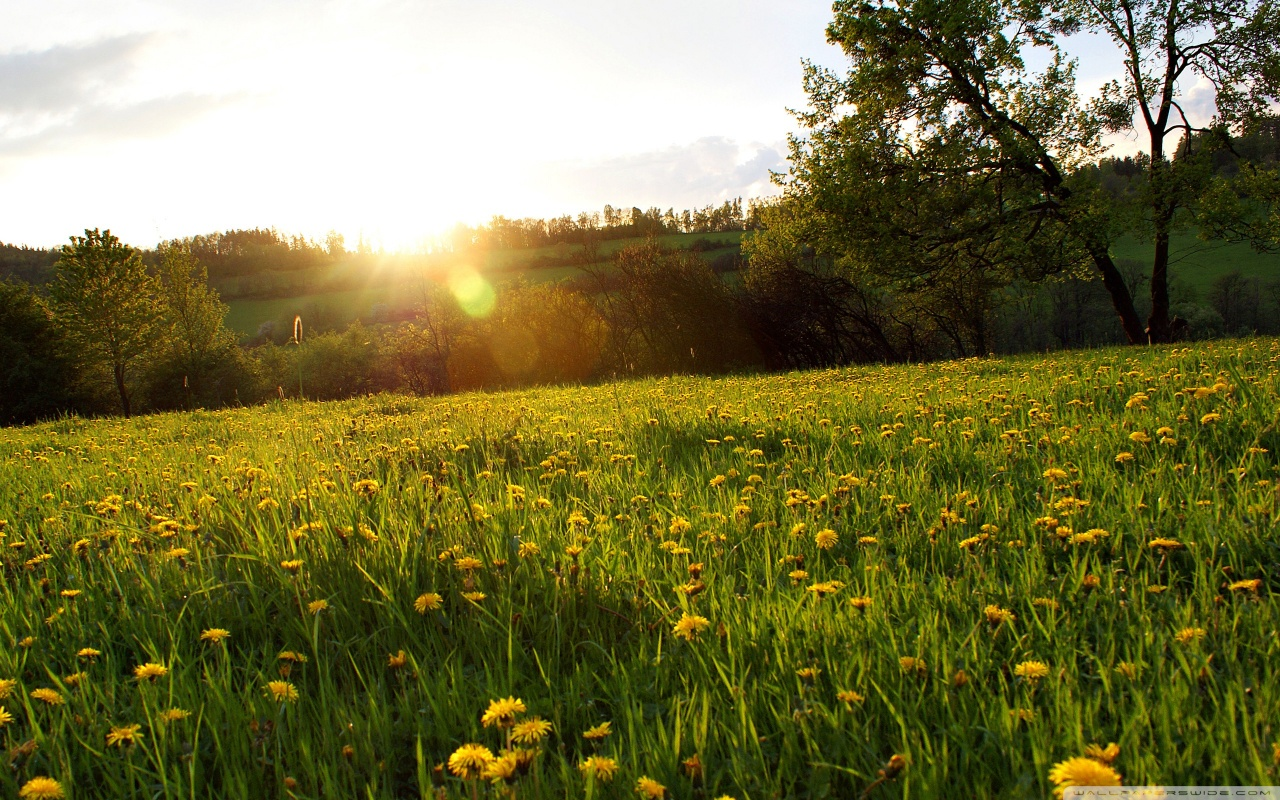 Free Meadow Wallpaper