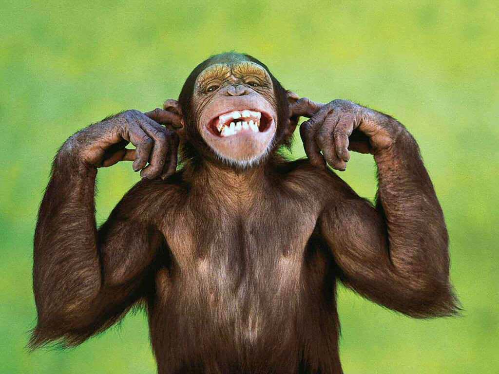 free Monkey wallpaper wallpapers download