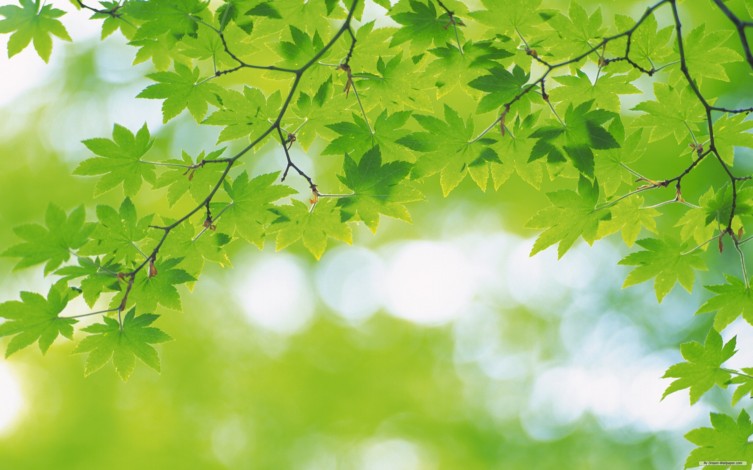 Free Nature Background wallpaper  2560x1600  #30285