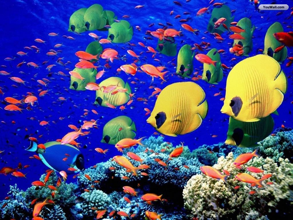Free Ocean Life Wallpaper