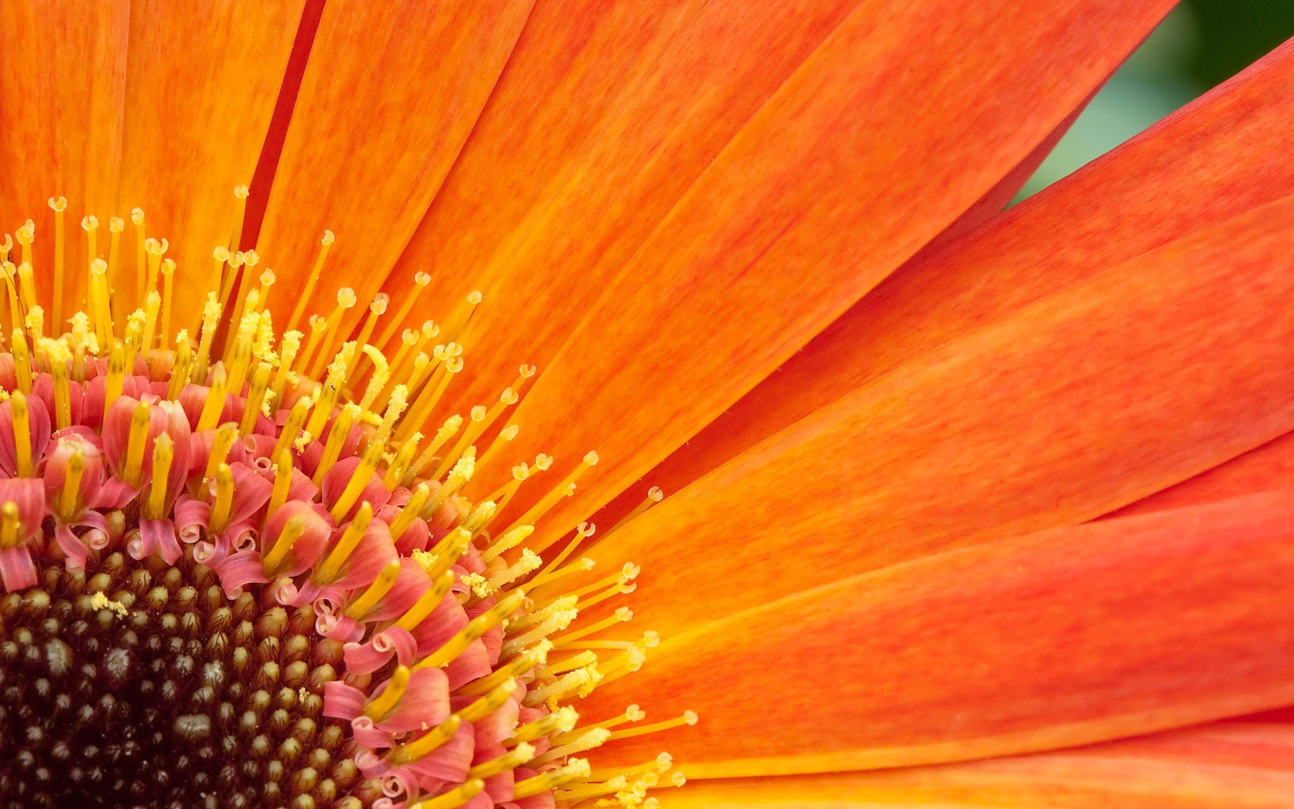 Orange Flower Desktop Background Wallpapers Hd Free 2560x1600px