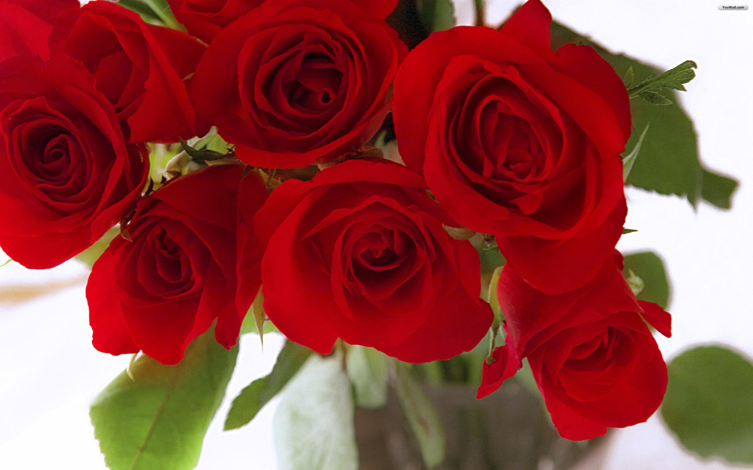 Red Roses Wallpaper