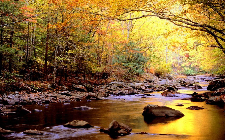 Free Beautiful River Wallpaper