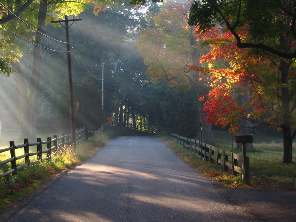 Seenary Free Park Scenery The