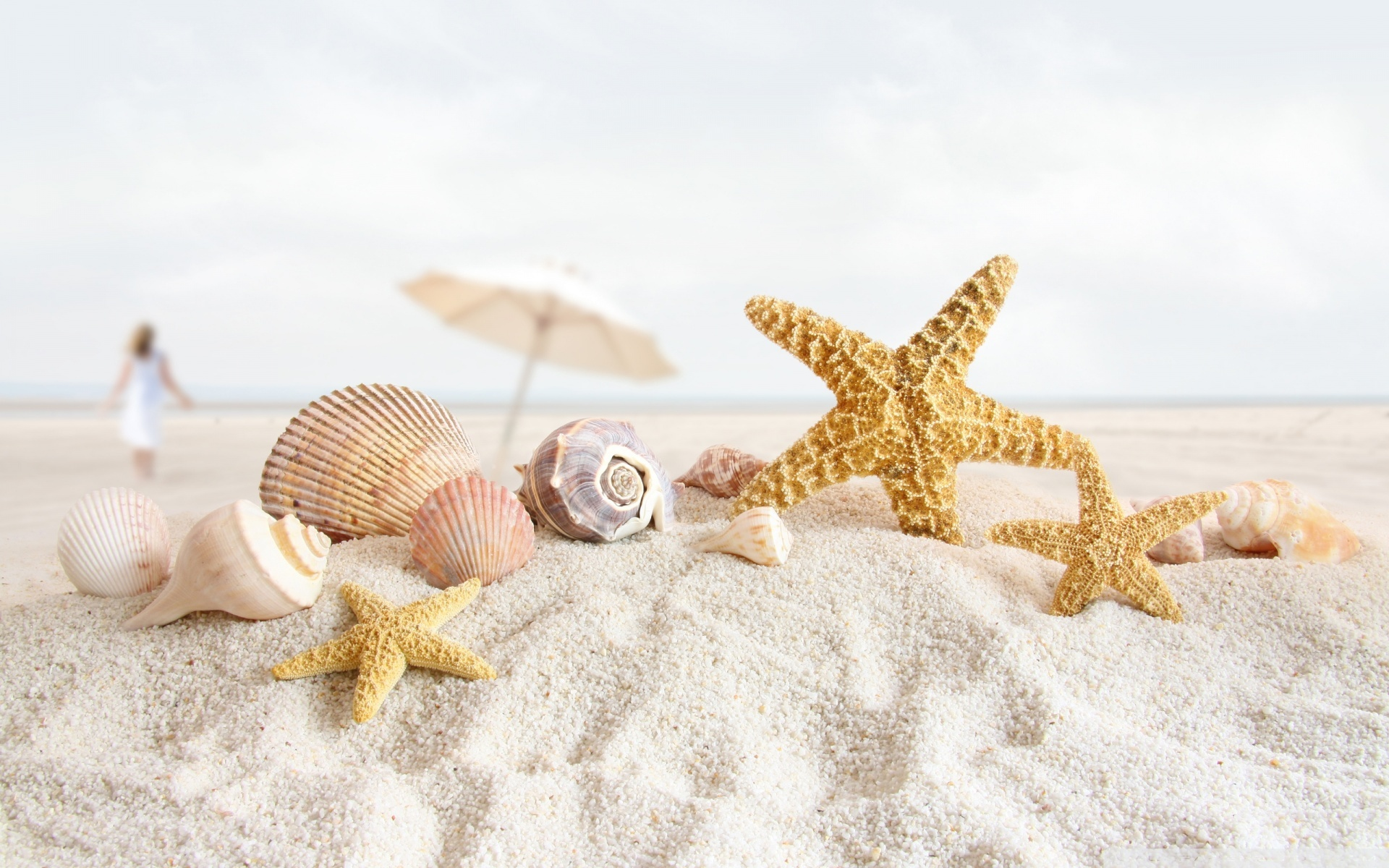 Free Seashell Wallpaper