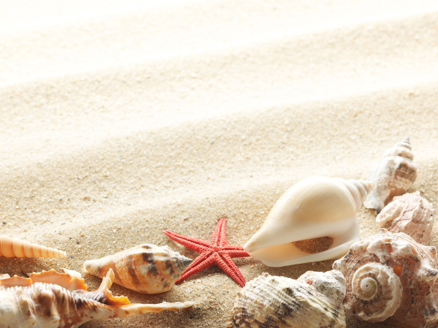 Shell Beach 17789