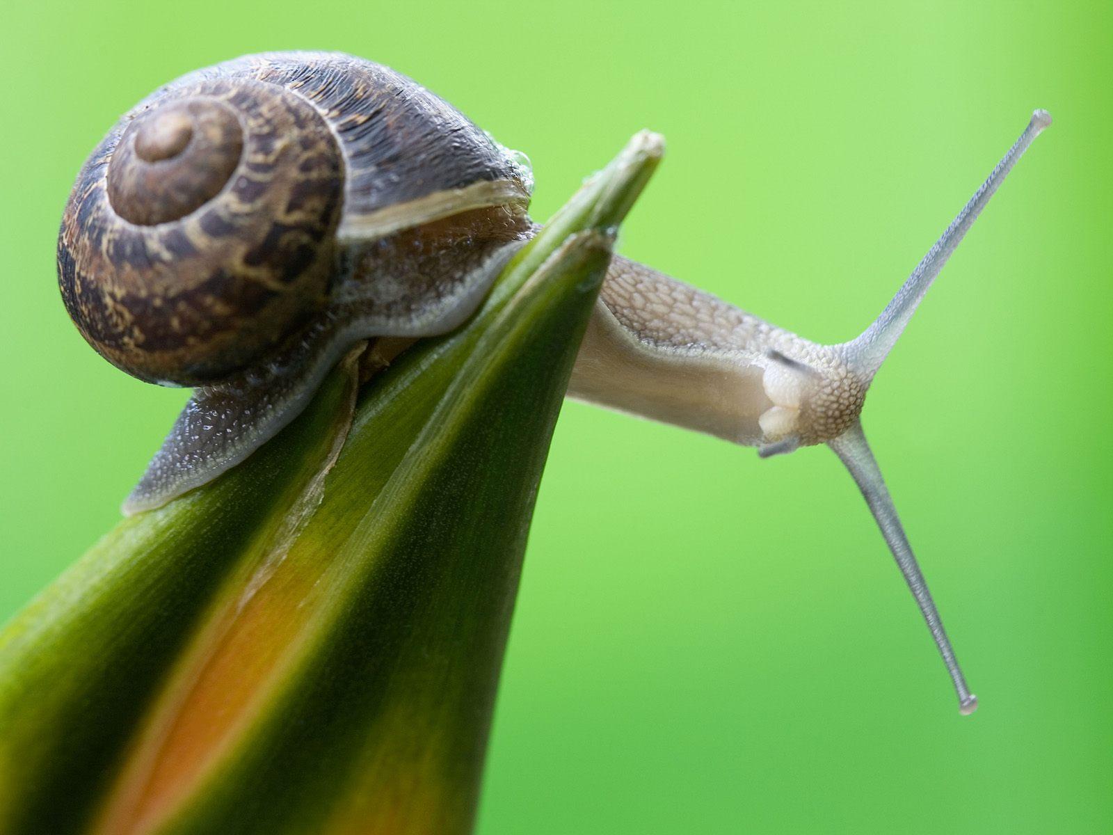 Free Snail Wallpaper