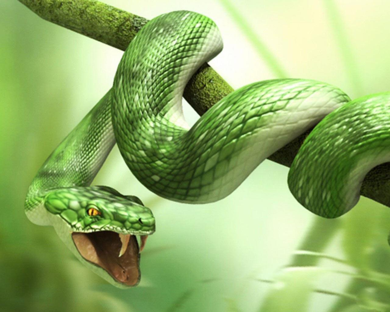 Free Snake Wallpaper