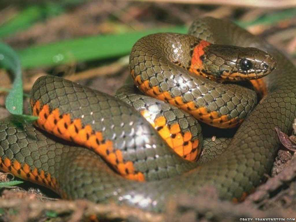 exotic snake wallpaper
