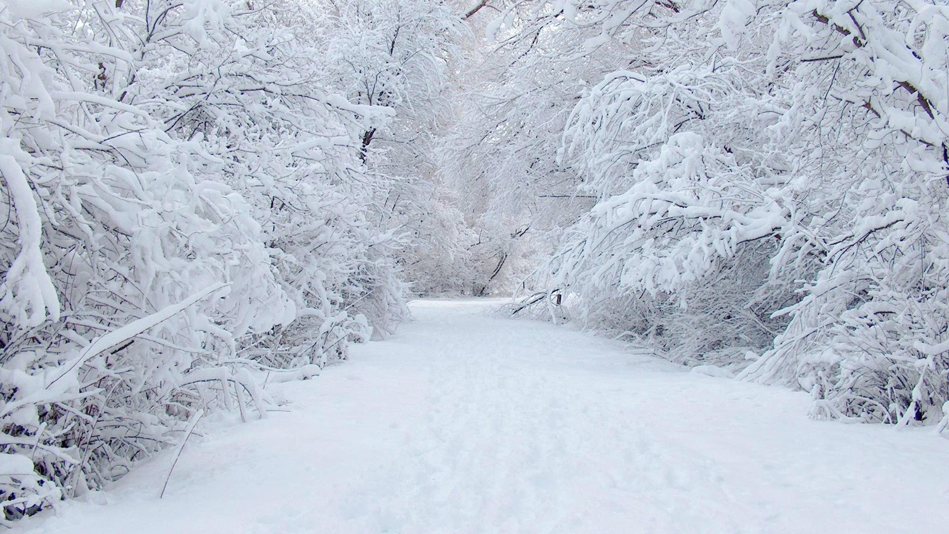 Free Snow Wallpaper