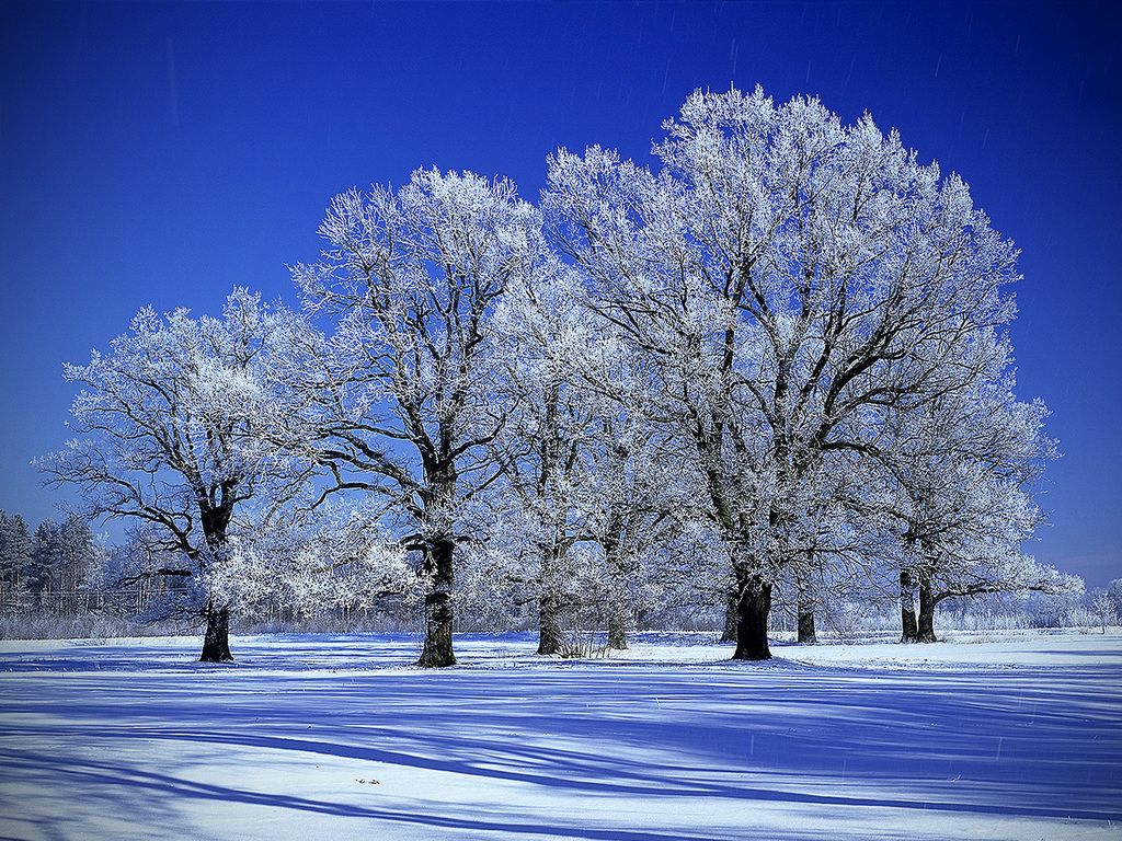 Free Snowy Trees Wallpaper