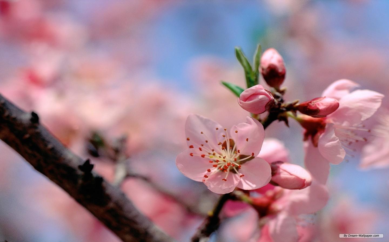 Free Spring Flowers Wallpaper
