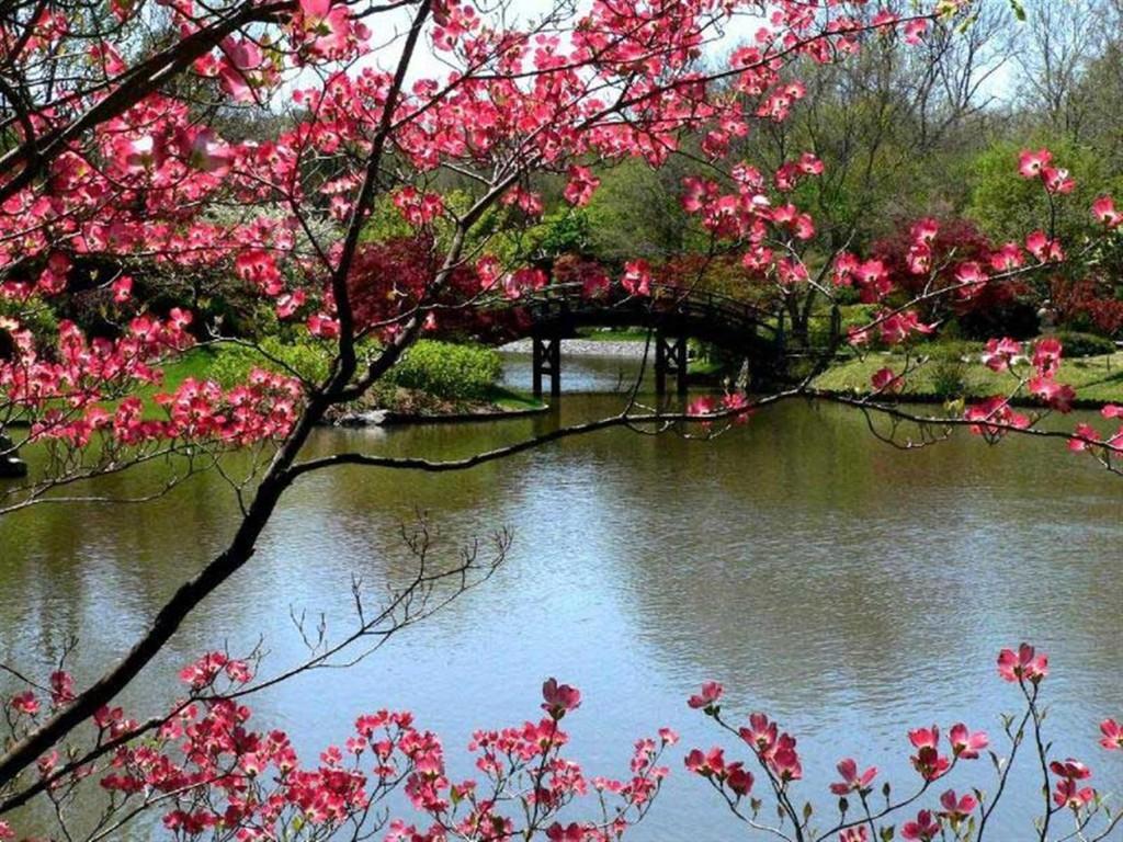 Free Spring Screensavers Wallpaper 1024x768 83312