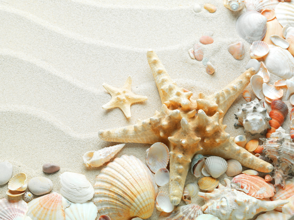 Free Starfish Wallpaper