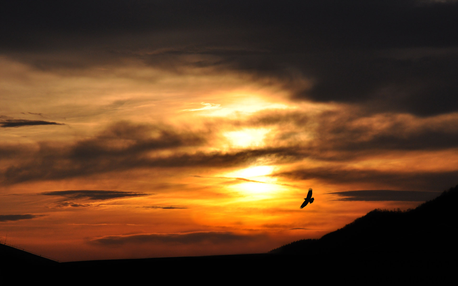 Free Sunset Silhouette Wallpaper 38080 2560x1600 px