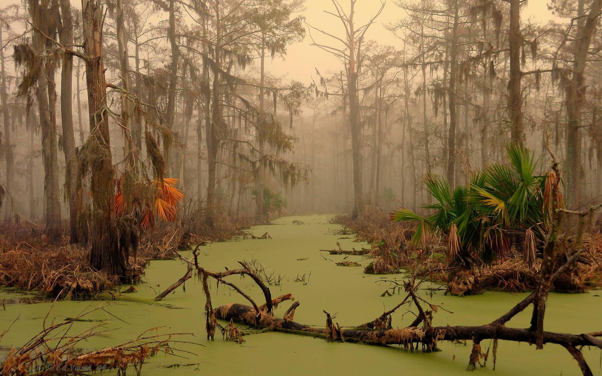 Views: 1269 Swamp Pictures 4565
