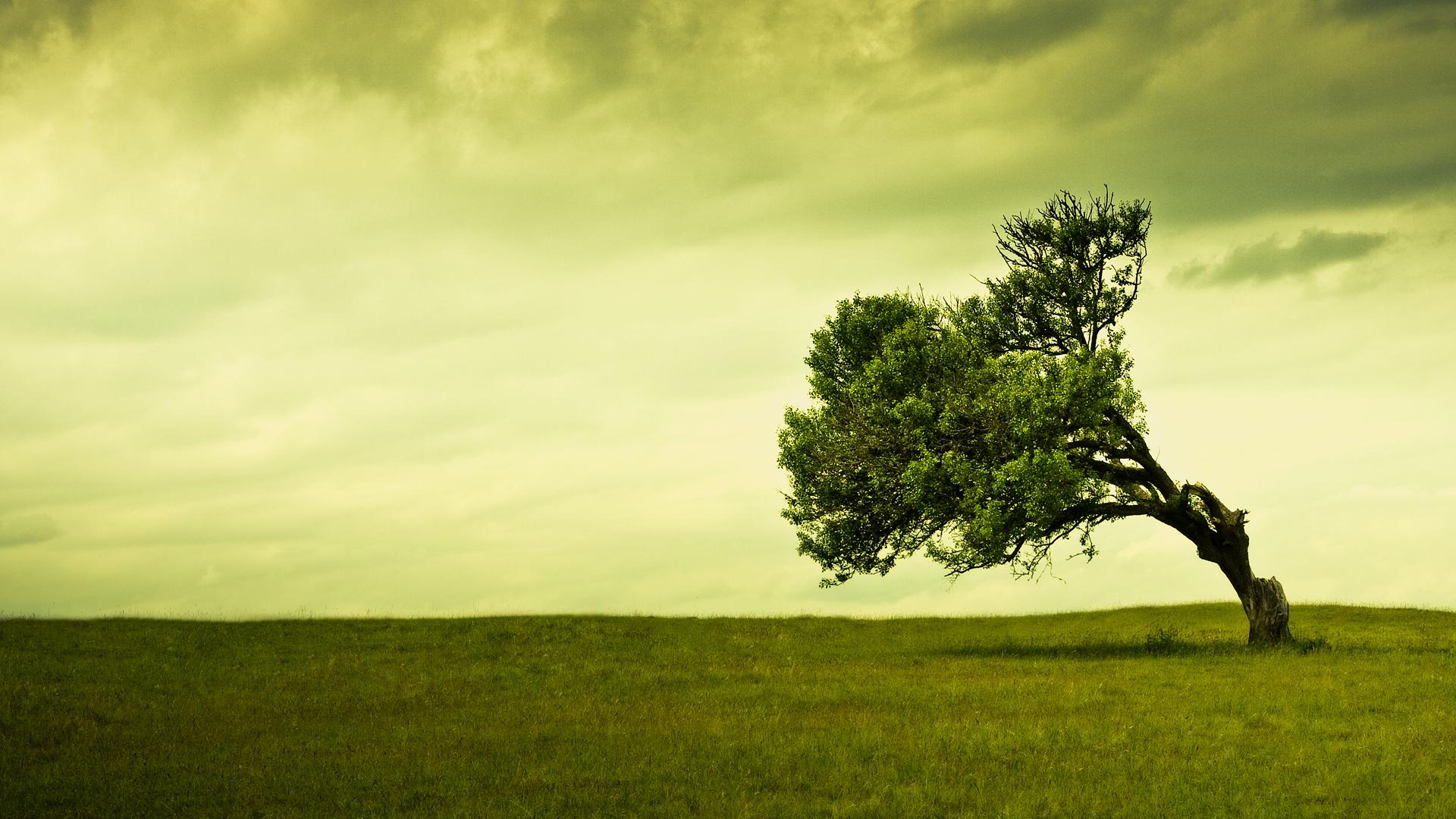 Free Tree Wallpaper