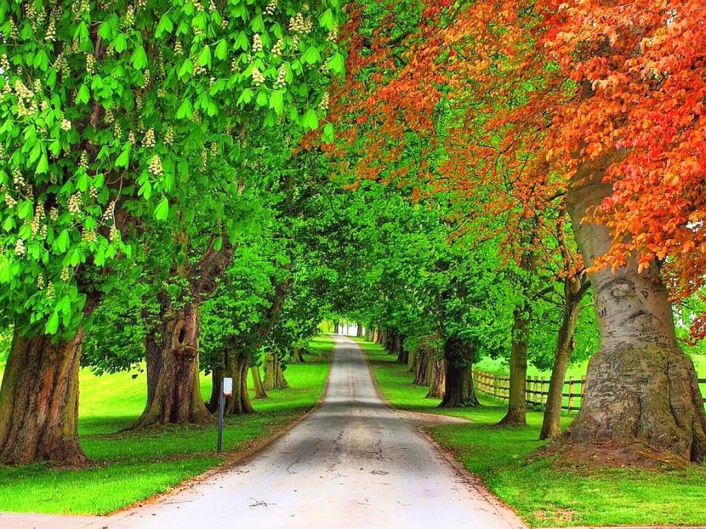 Free Trees Wallpaper 12647